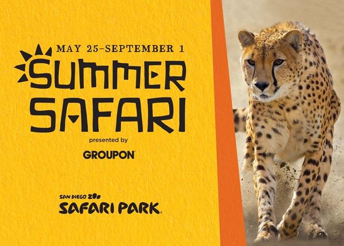 Summer Safari at the San Diego Zoo Safari Park - The