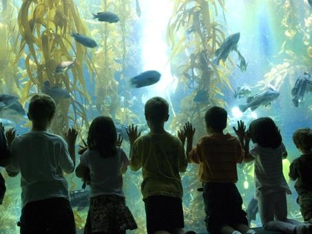 Birch Aquarium at Scripps - The Official Travel Resource for