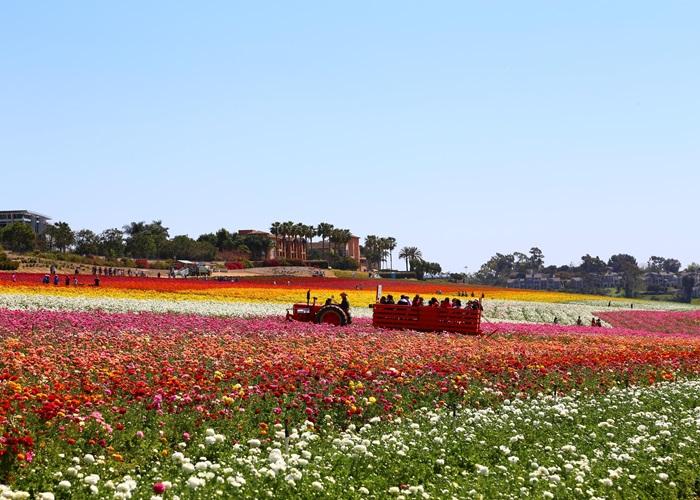 Flower Garden In San Diego