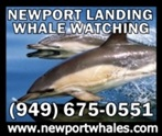 Newport Landing Whale Watching