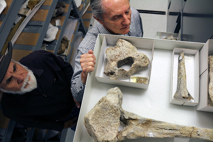 retired San Diego Natural History Museum Paleontologist Richard Cerruti (left) and Curator of Paleontology and Director of Paleo Services Dr.  Tom Deméré (right) examining a drawer full of Cerutti Mastodon site fossils