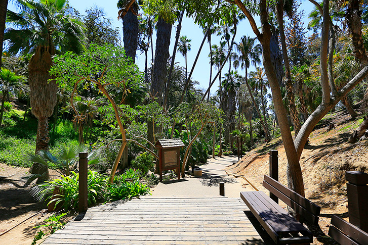 Palm Canyon in Balboa Park San Diego