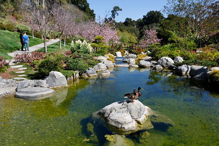Japanese Friendship Garden of San Diego