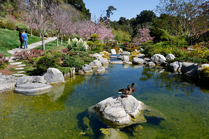 Japanese Friendship Garden of San Diego