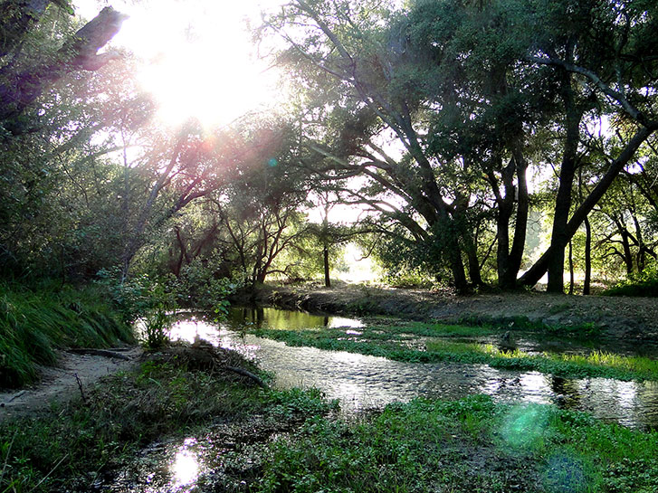 Best Inland Hikes in San Diego County - Los Penasquitos Canyon