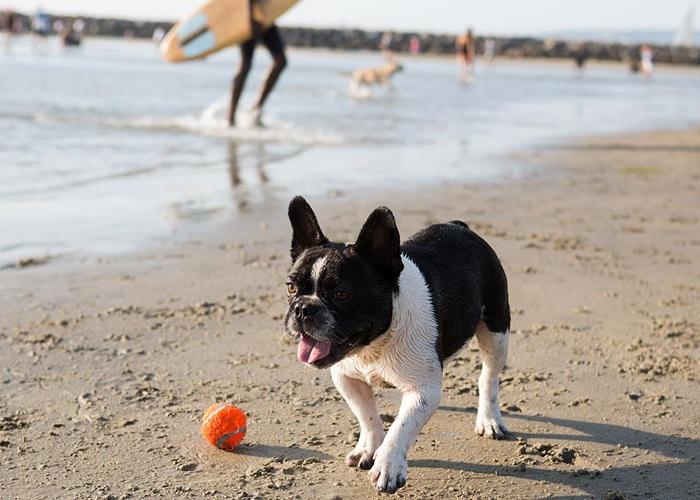 Image result for san diego dog