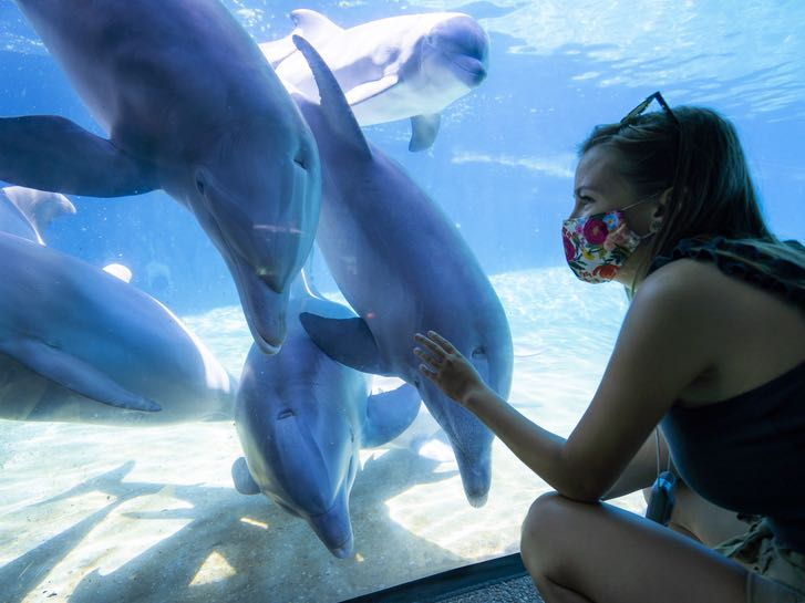Woman wearing a mask ans safely viewing dolphins at SeaWorld San Diego