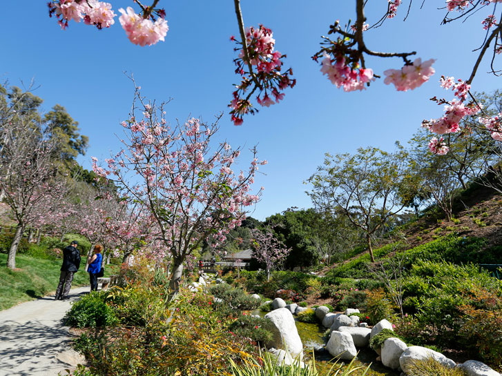 image of a stream, trees, and flowers at the japanese friendship garden in balboa park