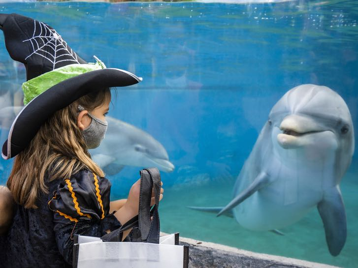 Child dressed as a witch with a dolphin at SeaWorld San Diego Spooktacular