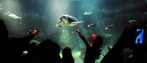 Turtle at SeaWorld San Diego Ca
