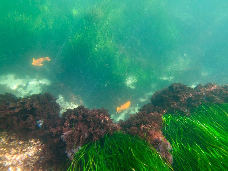 LaJolla Underwater Park