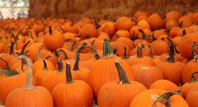 Pumpkin Patches in San Diego