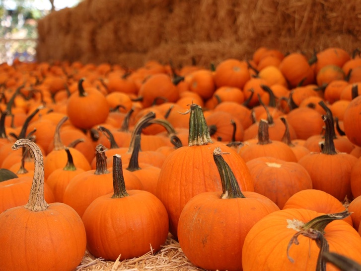 Pumpkin Patches in San Diego