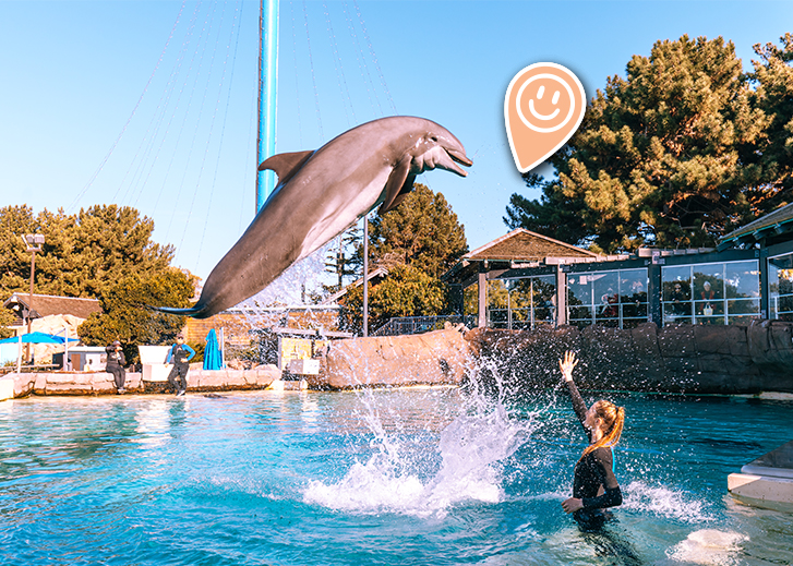 Dolphin trainer at Seaworld
