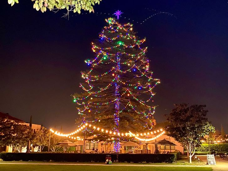 Christmas Tree in Liberty Station