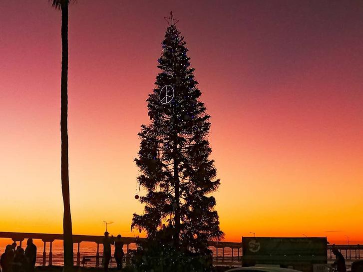 Christmas Tree in Ocean Beach