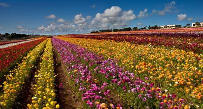 San Diego Spring Flowers
