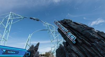SeaWorld San Diego's Electric Eel