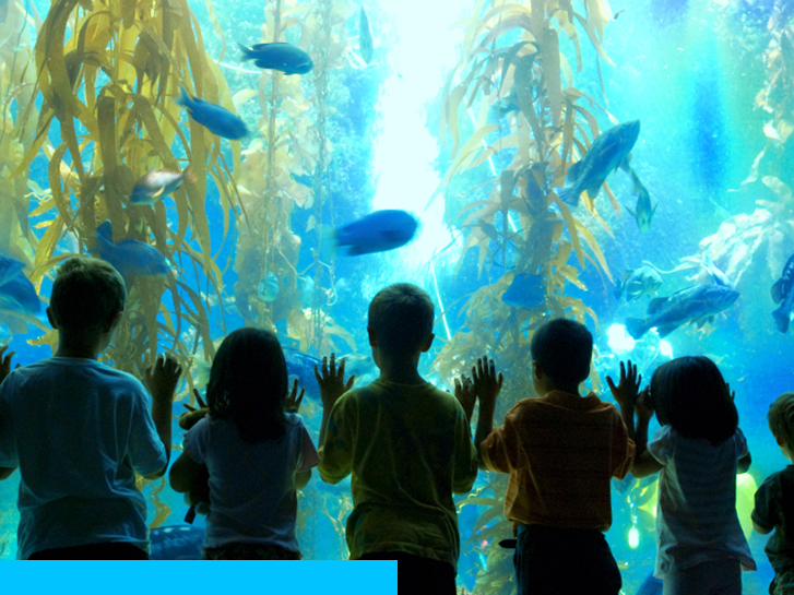 Sunny 7 Ways to Make a Splash in San Diego Birch Aquarium