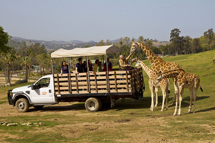 Caravan Safari Adventure at the San Diego Zoo