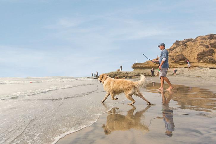 Del Mar: Dog Beach