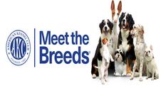 AKC Meet the Breeds