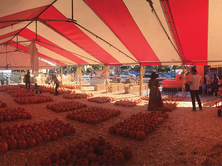 Mr. Jack O' Lanterns Pumpkin Patch in La Jolla
