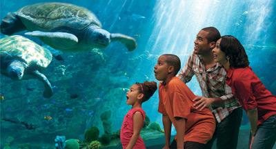 Family at Aquarium in San Diego