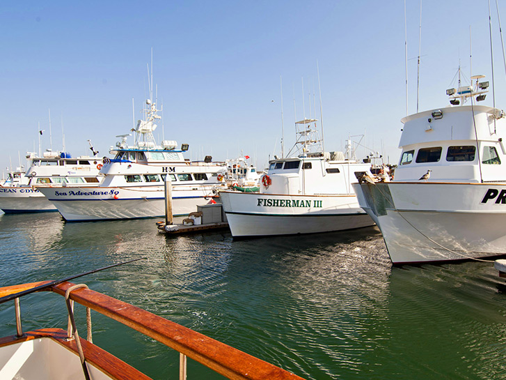 Fishing fleet in a Point Loma harbor