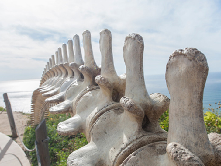 Whale bones at the Whale Overlook at the Cabrillo National Monument
