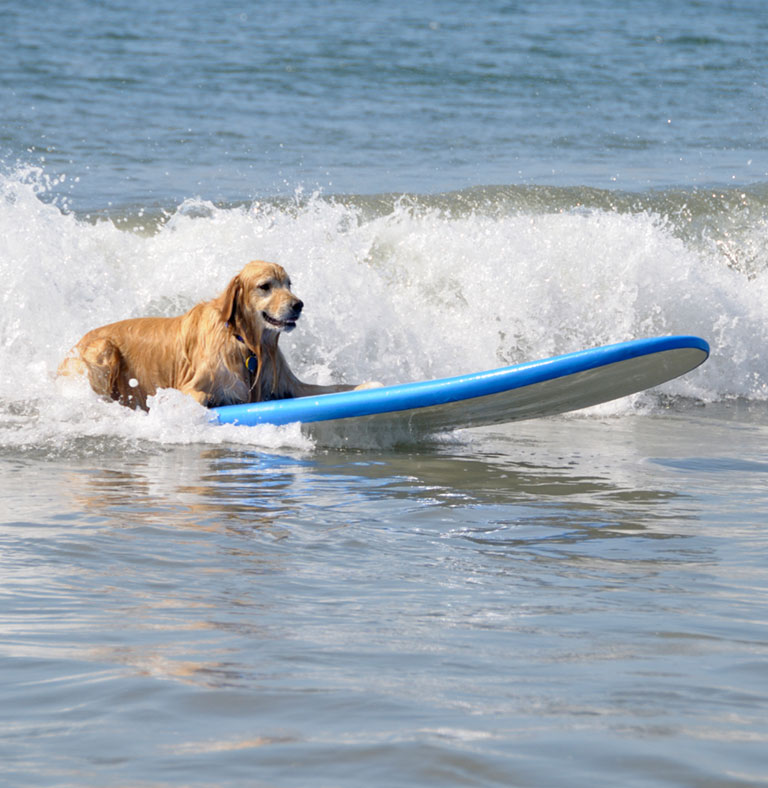 Imperial Beach Surf Dog Compeion