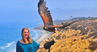 Activities in San Diego - Sky Falconry