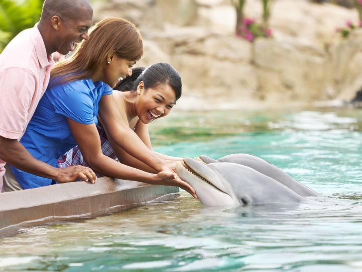 Dolphin animal encounter at SeaWorld San Diego