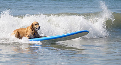 Imperial Beach Surf Dog Contest