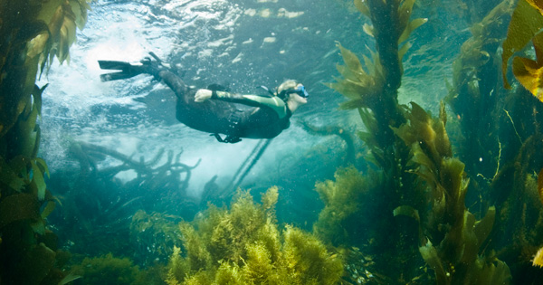 Snorkeling the Kelp Forests